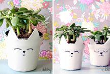 Succulent pots with faces