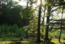 Czech_nature_forest