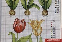 Lale Festivali (Tulip)