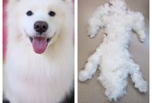 Dog grooming at The Pet Pad / Grooming styles, spa treatments, tips and more