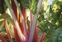 Growing vegetables