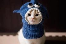 bonnet pour chat au crochet
