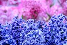 Flowers, herbs