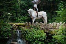 Horse World
