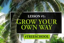 Tree School / A series of thoughts and reflections on what we learn from trees :)