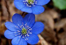 Spring/Vår