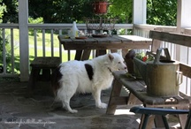 Mockingbird Hill Cottage: My Porch / by Claudia Hill-Sparks