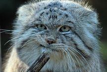 Фотографии животных. Photos of animals.