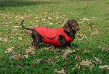 Dachshund Waterproof coat Pepper Petwear