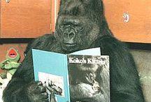 Books Worth Reading / by 3gorillas
