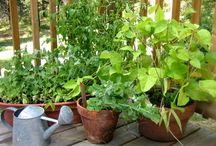 BEST VEGETABLES GROWN IN A POT