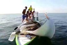 Увлекательная рыбалка. Охота на огромного ската (Манту).