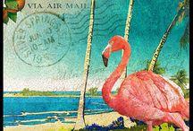 Alte Postkarte & Werbung