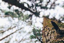 Photo Inspo ~ Nature