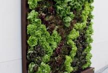 б вертикальное озеленение, ландшафтный дизайн, свет садовый, цветы, растения