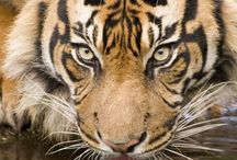 NGK Photo Comp - Amazing Animals! / Get inspired for the National Geographic Photography Contest for Kids 2014 with these fab photos of amazing animals!