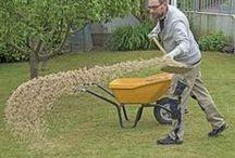 Rasen von Moos befreien