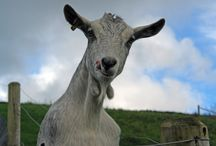 Our Animals / Animals always create a point of interest / by Higher Bowden Holiday Cottages
