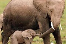 Animal Mothers and Their Babies
