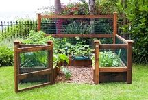 Gardening! / by Tracey Hagan