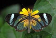 Butterflys / by Cathy Kaler