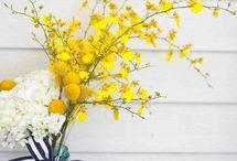 Black,  white and lemon yellow :) / by Sue Adams