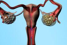 Urology / Urology Videos