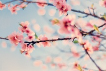 Cherryblossom / Im deeply obsessed about cherryblossom things. Need to get summit like this tatted  on my skin. Love.
