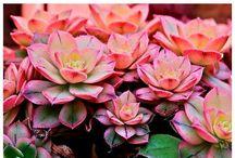 Beautiful plants & flowers