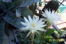 Florile mele- Carla si Giulia