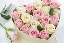 Τριαντάφυλλα ΚΑΡΔΙΑ