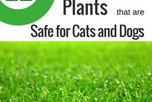 Plants safe for cats & dogs