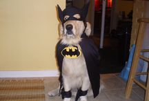 """Halloween / Costumes, parties, recipes, safety ideas - have a howl of a """"Howl-o-ween"""" with your pets!"""