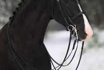 horses my favorite.... my dream to have a horse farm someday