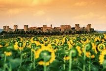 Tuscan Love!!