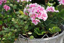 λουλουδια φητεμα