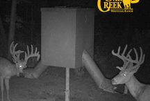 Oak Creek 2 Trail Cam 2015 / Here are the trail cam photos for the 2015 season from Oak Creek 2.