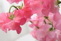 Smukke farver og blomster