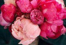 Пионы / Цветы