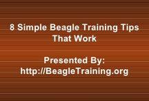 Doggy training etc