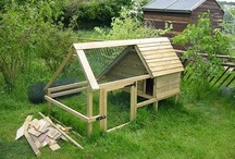 Day chicken coops