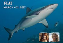 Go shark diving with us / Changing the perception that sharks are not man eating monsters