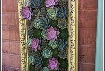 Flower planting ideas / Frame