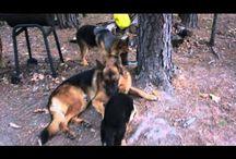 Von der Otto German Shepherds videos / World Sieger German Show in Germany, http://ottogsd.com