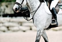 Equestrian jumping / This is some jumping tack