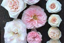 nazvy kvetov