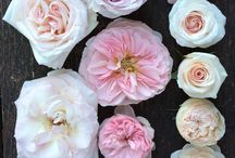 Wedding Flower Colour Charts