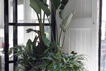 Grow indoors