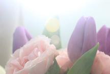 Flowers / Flowers / by Janice Gilormini