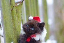 ♥Coisinhas de Natal♥ / by ♥Tereza Cristina Euzebio♥